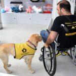 Cuarta edición del Programa de Entrenamiento de Perros de Asistencia