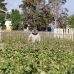 Con reconocimiento de la OIV, COVIAR presentó la Guía de Sostenibilidad Vitivinícola Argentina